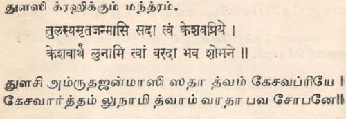 Tulsi (Thulsi or Thulasi) - The Holy Basil - Thiruthuzhai